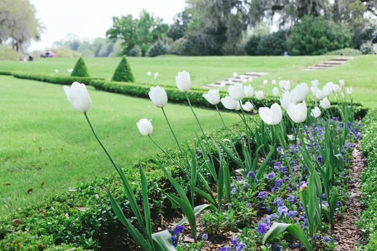 Charleston_Spring-22