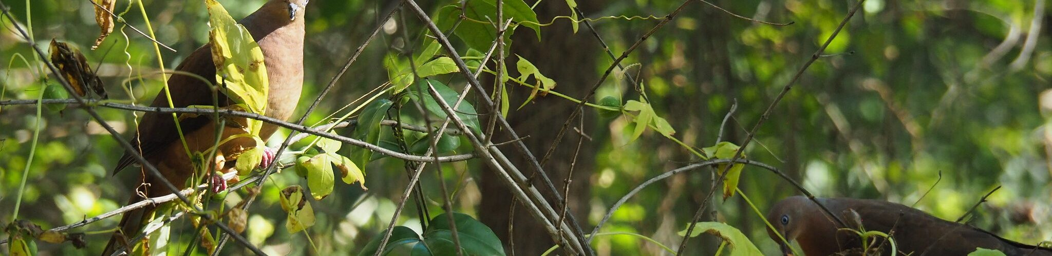 Birds hiding in a bush