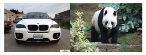 "Desiigner took his inspiration for the song ""Panda"" from the BMW X6 white model, which does kinda resemble the furry animal."
