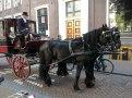 Amsterdam 1 - Copy - Copy - Copy