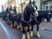 Amsterdam horses - Copy - Copy