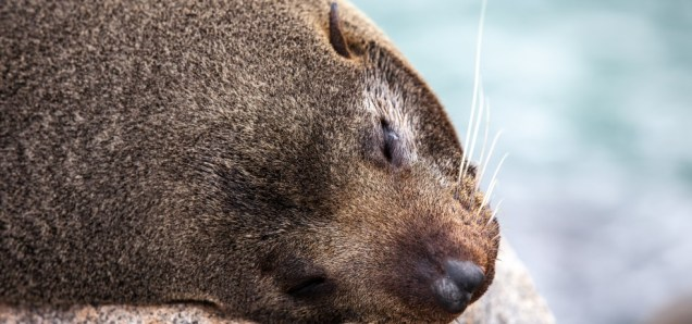 cropped-seal-narooma-1-c2a9-daneille-ryan-septaug-2014.jpg