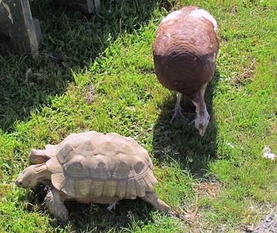 Rhonda and the tortoise.