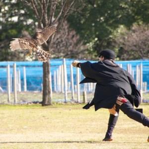 鷹を放つ鷹匠