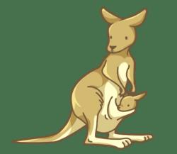 p346_kangaroo