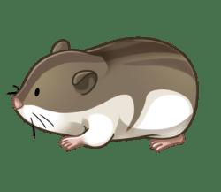 p351_hamster