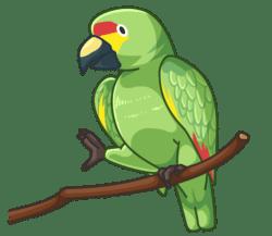 p370_Parrot
