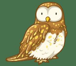 p373_owl