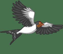 p382_swallow