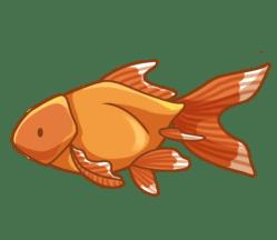p386_Goldfish