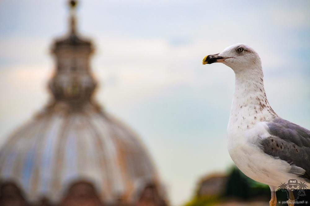 Podróż Życia, Rzym, Rzym