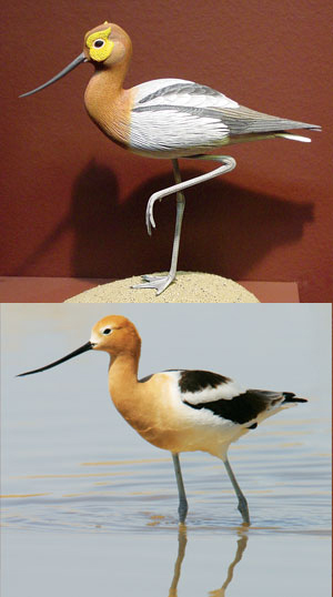 Avocet-Milwaukee