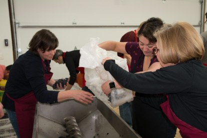Carrie Matlock, Wendy Covich, & Lydia Lutzow loading grapes to be destemmed and crushed