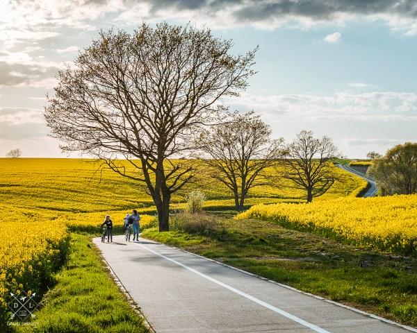 Karwowo maj rzepak plakat fotograficzny wiosna na wsi