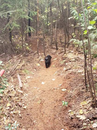 coco on trail