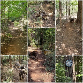 trail collage 1