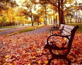 flash-fiction-park-bench-in-the-fall