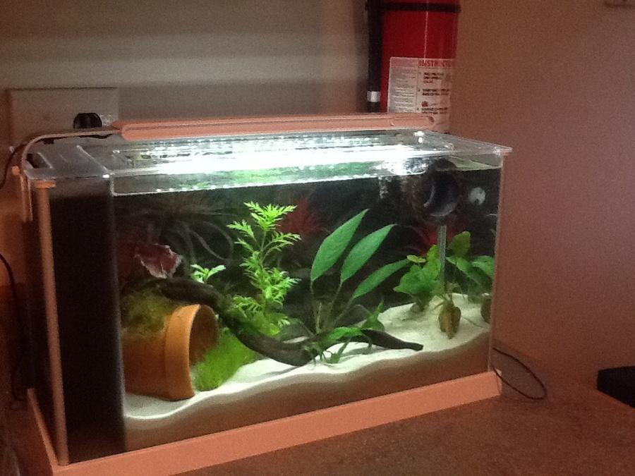 Betta Fish Light Bulb