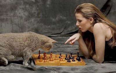 Шахматы. Виды и особенности. Как выбрать и виды правил. Применение
