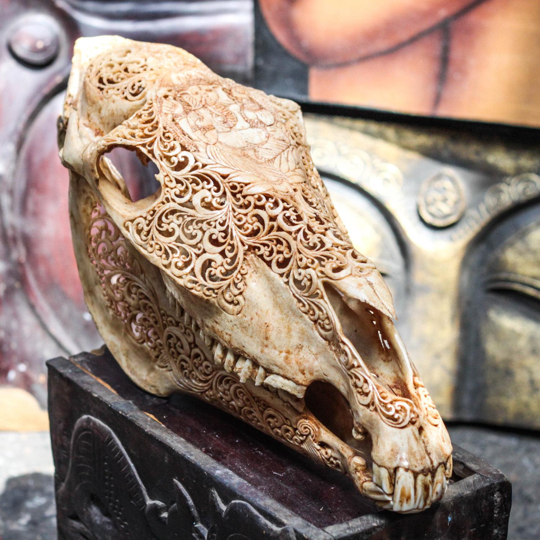 Hand Carved Ganesha Horse Skull Real Mule Animal Skull