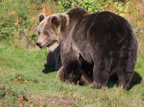 Bearpark_img_4777_blog