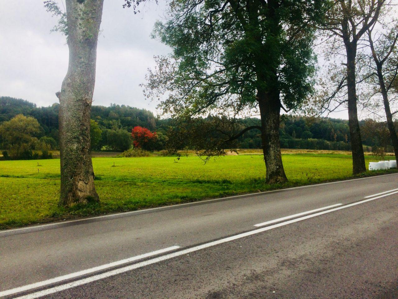 widok na pole z kolorowymi liśćmi drzew