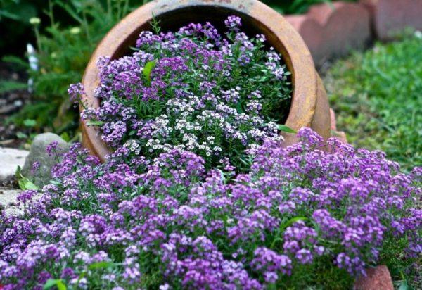 Каталог многолетних цветов для дачи: фото с названиями ...