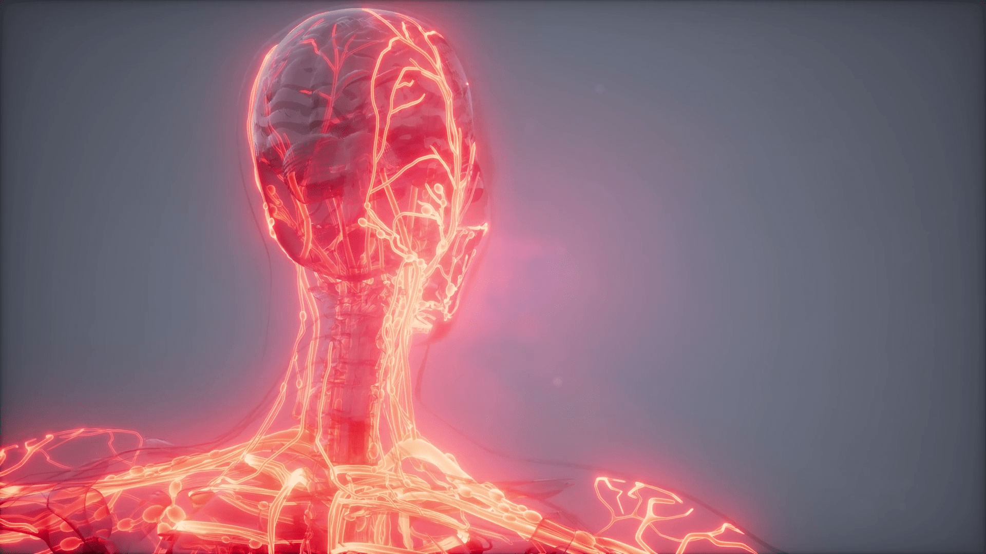 Blood Vessels Of Human Body Motion Background