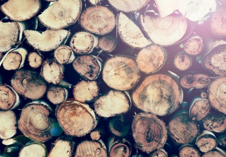 Lumber from outdoors can track in bugs, pests and debris.