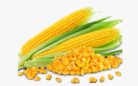 Maize: CBN tells Authorised Dealers to Stop Processing Form M