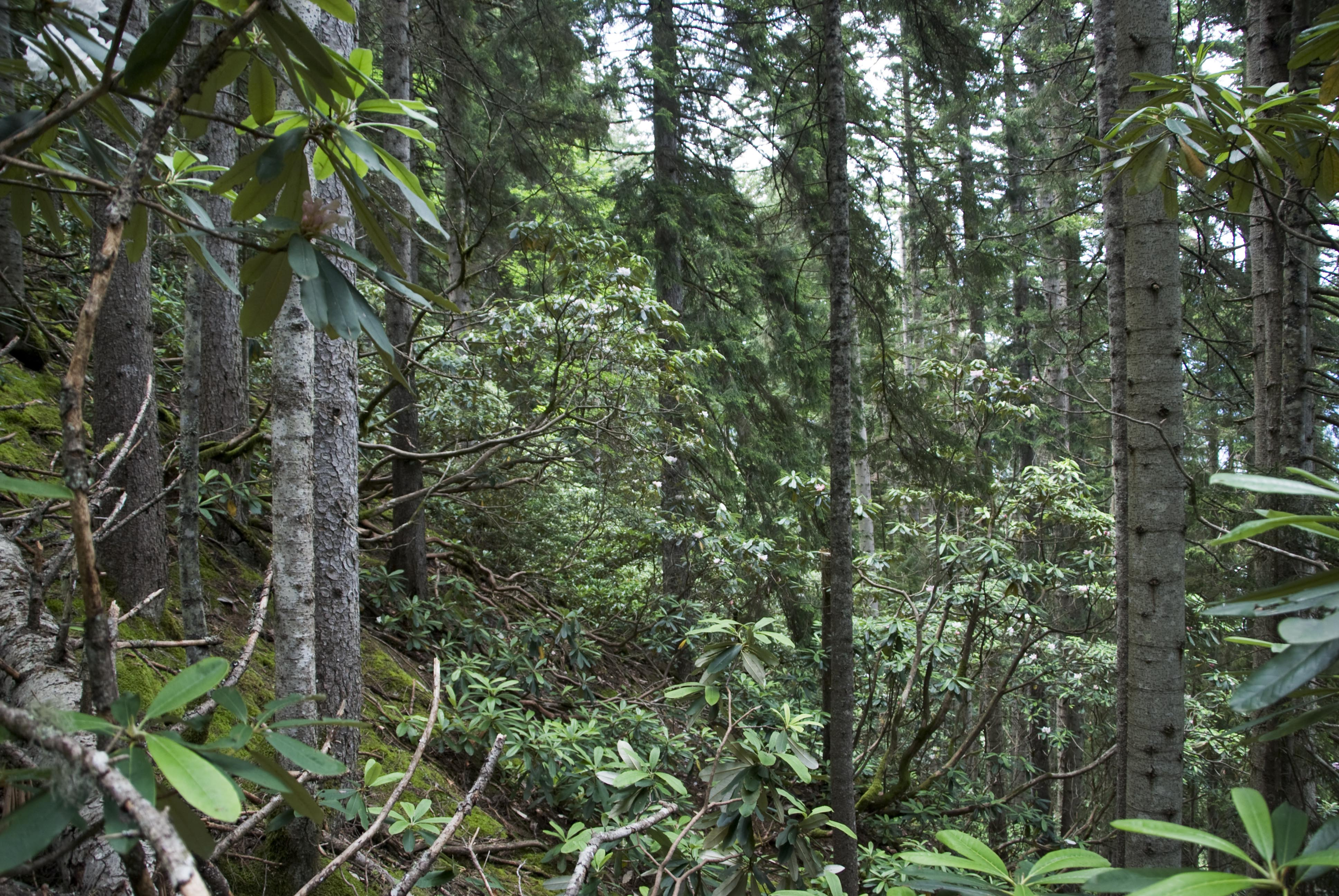 They comprise both hard and soft wood trees like oak, Ecology Of The Colchic Temperate Rainforest Dario Martin Benito