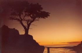 SunsetOverLoneCypress