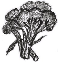 Broccoli Drawing