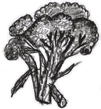 Broccoli Drawing