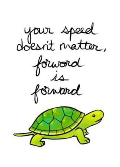 tortoise quote