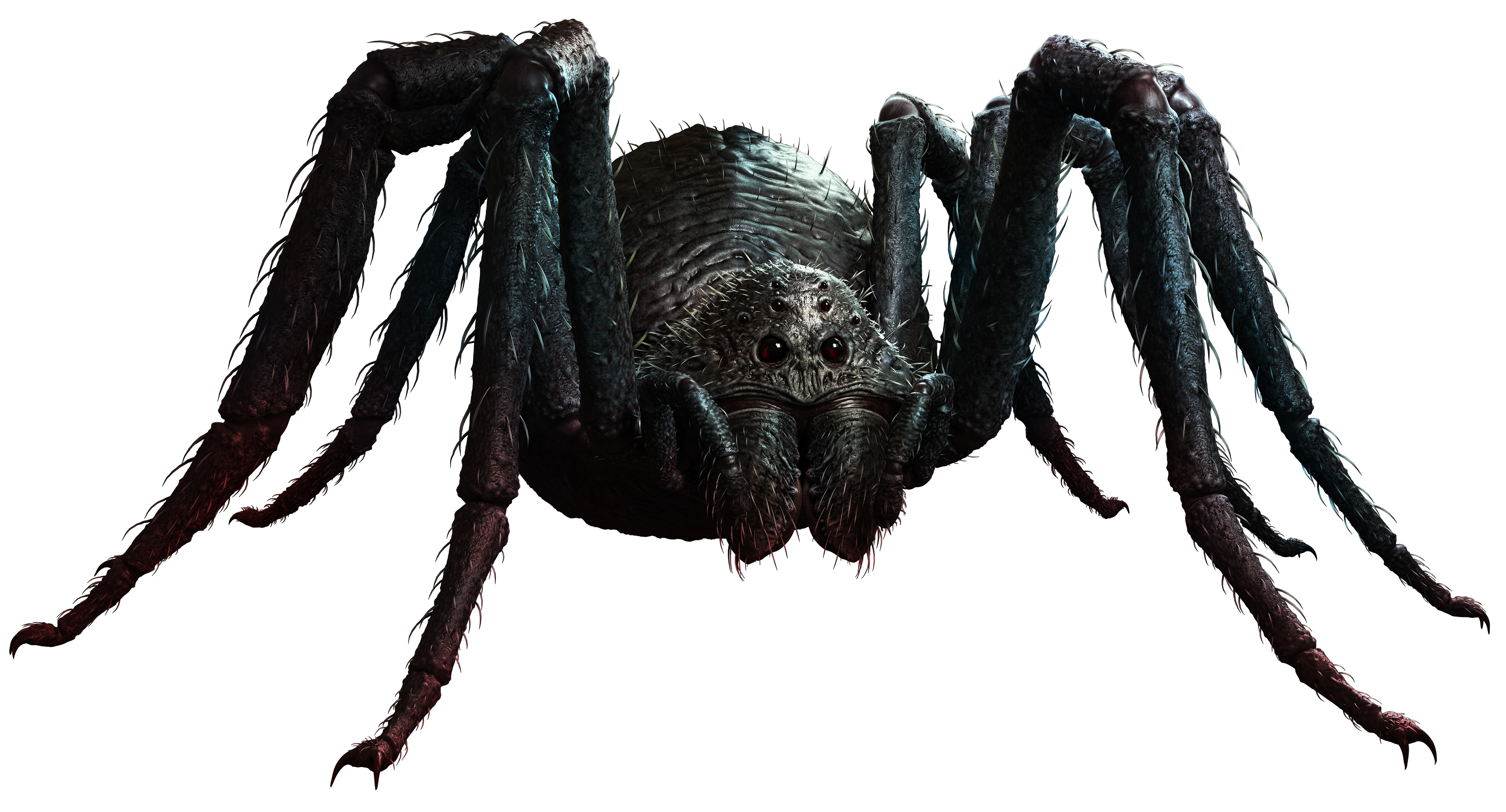Flying Spider New Monster For Fifth Edition 366 Days Of