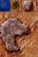 DU7 Desert of Athas 1A