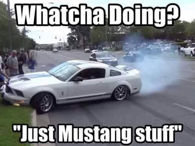 Hilarious Mustang Memes Have Broken The Internet Here Are