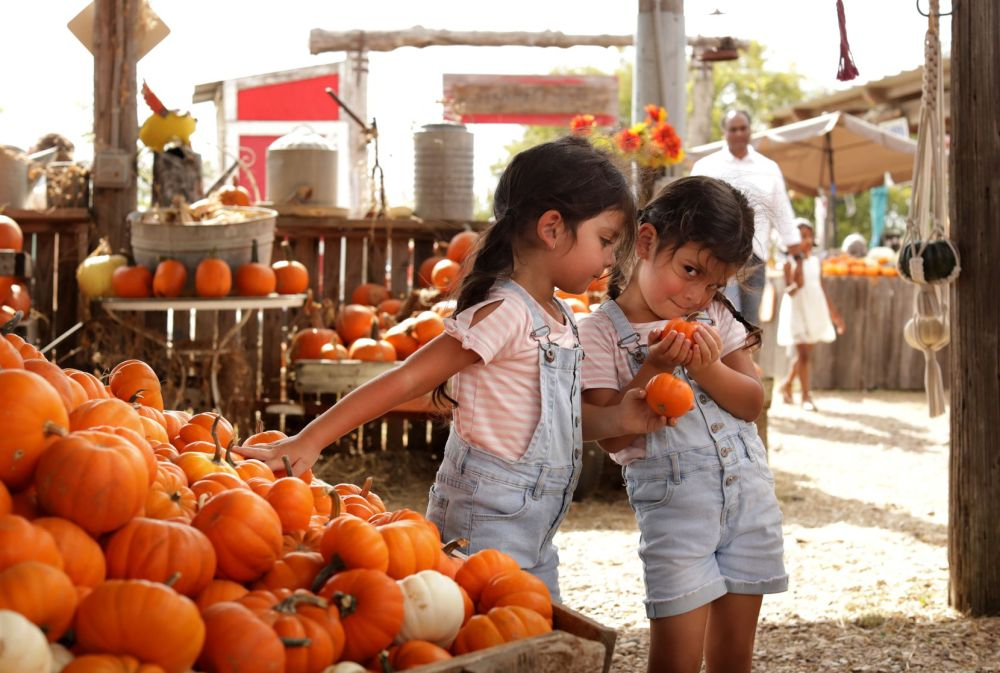 4-year-old Elli Rios, left, and 4-year-old Lili Rios pick out pumpkins during a weekend pumpkin patch event at Lola's Local Market in Melissa, TX, on Oct. 10, 2021.  (Jason Janik/Special Contributor)