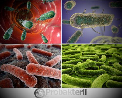 Опасность вирусов, инфекций и бактерий для человека - Мир ...