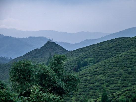 Tea plantations near Mirik, West Bengal