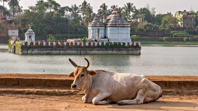 Bhubaneswar, Orissa