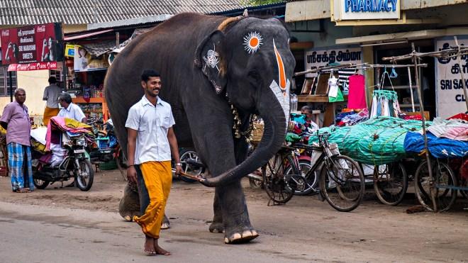 Elephant, Sripuram, Vellore