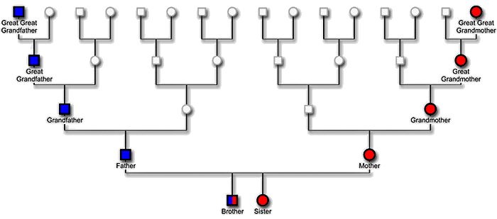 What is a Haplogroup?   DNAeXplained