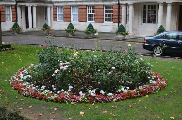London rose garden