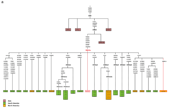 Clovis mtDNA