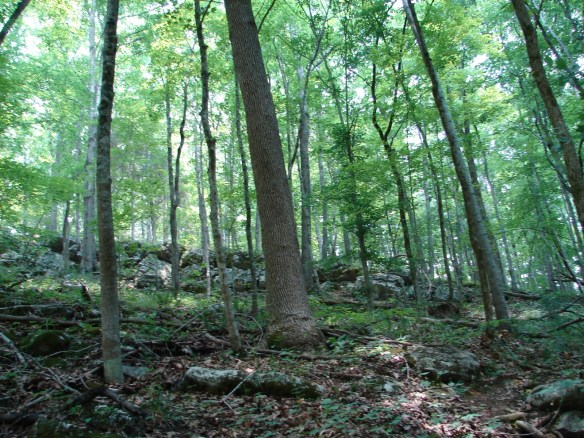 Vannoy Hancock wooded land