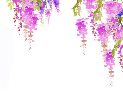 wisteria