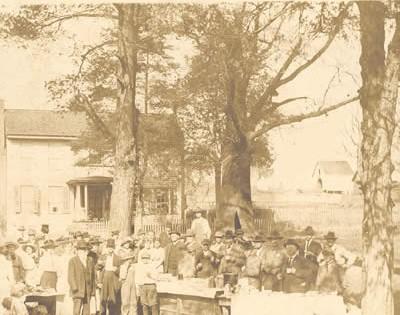 Tory Oak 1915