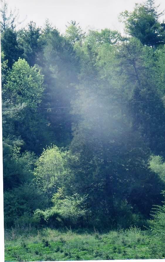Vannoy road vegetation'